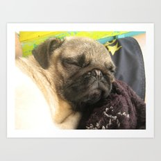 Cute Pug Sleeping - hard day at the beach Art Print
