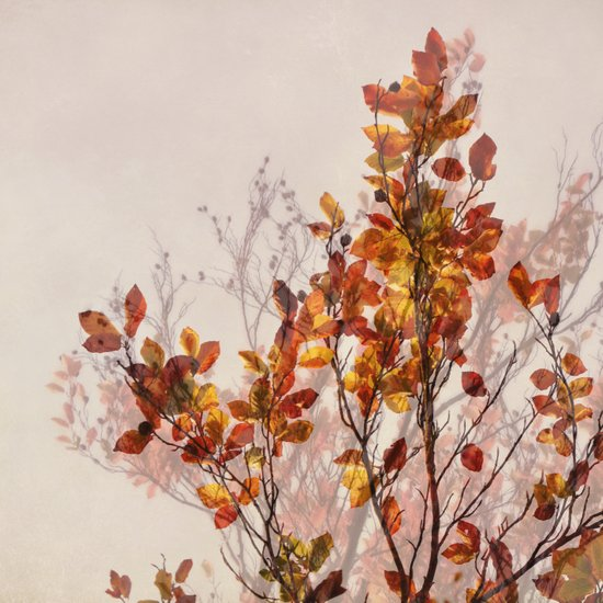 autumn symphonies II Art Print