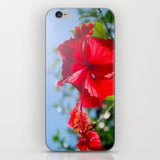 hibiscus in Thailand iPhone & iPod Skin