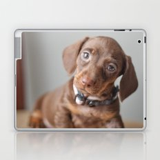 Dachshund Puppy Laptop & iPad Skin