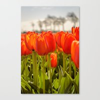 Tulips standing tall Canvas Print