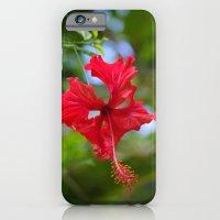 Scarlet Flower iPhone 6 Slim Case