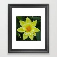 Yellow Tufted Dahlia Framed Art Print