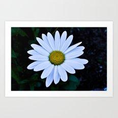 White and Yellow Daisy Art Print