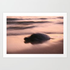 Soft Turtle Art Print