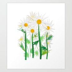 Danish Daises Art Print