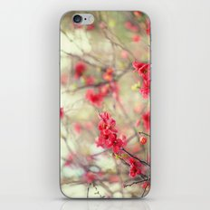 Dancing Quince iPhone & iPod Skin