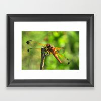 Brown Dragonfly Insect C… Framed Art Print
