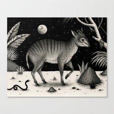 Zebra Duiker Canvas Print