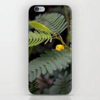 Blooming Fern iPhone & iPod Skin