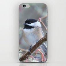 Chickadee In The Alder T… iPhone & iPod Skin
