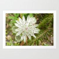 woodland flower Art Print