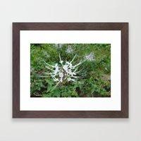Exotic Bloom Framed Art Print