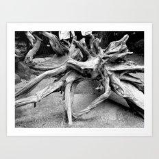 Weathered tree Roots Art Print