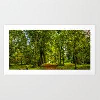 Woodland Pathway Art Print