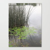 Lillypad tranquility Canvas Print