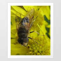 Art Print featuring Wellow wasp by tarakam