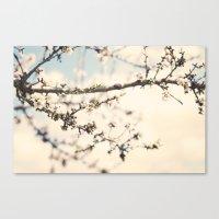 Flor del almendro. Canvas Print