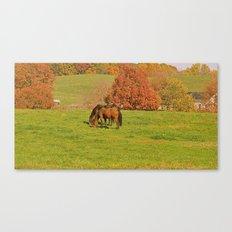 Horse Pasture Canvas Print