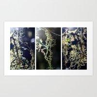 Lichen - Triptych Art Print