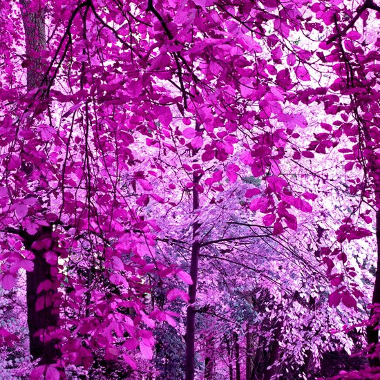 purple forest II Art Print