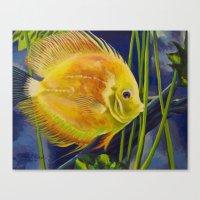 Yellow Discus Canvas Print