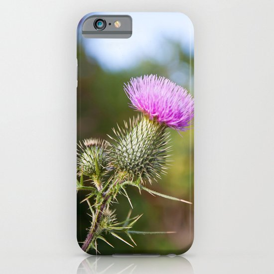 Bull Thistle in Mt. Rogers, Virginia iPhone & iPod Case