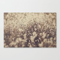 Field So Bright Canvas Print