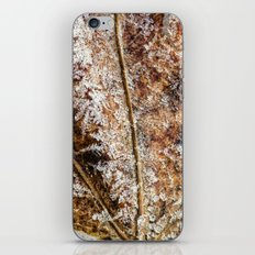 frost and a leaf iPhone & iPod Skin
