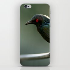 Starling iPhone & iPod Skin