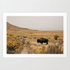 Bison Bull on Antelope Island Art Print