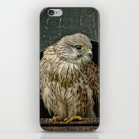 Young Kestrel In A Broke… iPhone & iPod Skin