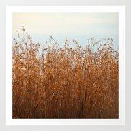 A Bed Of Reeds  Art Print