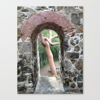 Virgin Islands, Sugar Mill Stone Ruins, Turpentine Tree Canvas Print