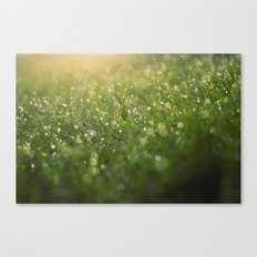 Dew on a Sunday Morning Canvas Print