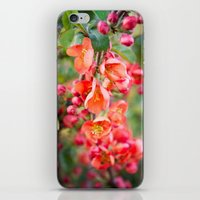 Quince blossom iPhone & iPod Skin