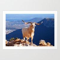 White Longhorn goat 7754 Art Print