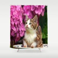 Kittens in bowl Shower Curtain