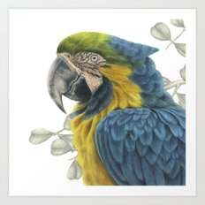 Blue & Yellow Macaw Art Print