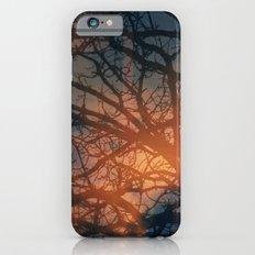 Trees In The Golden fog iPhone 6 Slim Case
