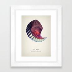 Haliotis Framed Art Print
