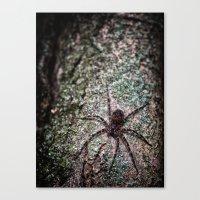 Creepy Spider Canvas Print
