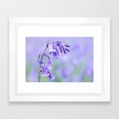 English Bluebell Framed Art Print