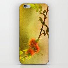 Robin's Pincushion iPhone & iPod Skin