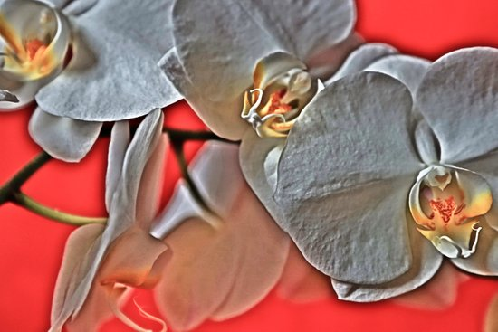 Orchids HDR Art Print