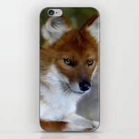 Dhole iPhone & iPod Skin