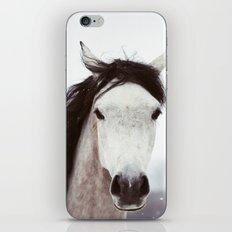 Winter Horse iPhone & iPod Skin