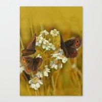 Summery Butterflies on Gold Canvas Print