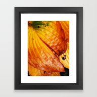 Framed Art Print featuring The Colors Of Autum by Mimulux
