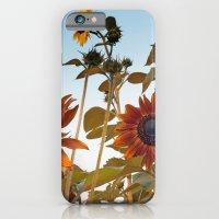 Red Sunflower... iPhone 6 Slim Case